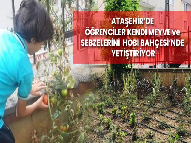 Ataşehir'de öğrenciler kendi meyve ve sebzelerini hobi bahçesinde yetiştiriyor