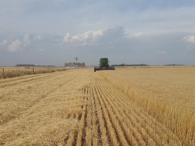 """""""Sıfır Gümrükle 500 Bin Ton Daha Buğday İthal Edilebilecek"""" Haberi Hakkında Açıklama"""