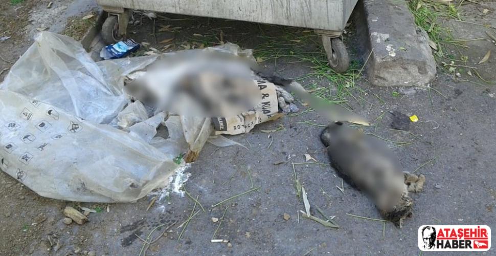 Ataşehir'de kedi cesetleri bulundu
