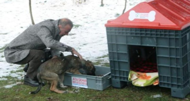 Battal İlgezdi, Sokak Hayvanlarını Unutmadı